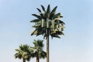 5G Cell Tower Palm Tree