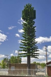 5G Cell Tower Pine Tree